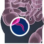 3D image of the appendix