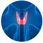 3D image of a thyroid
